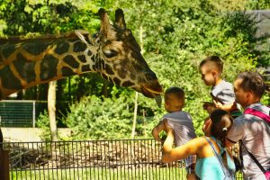 A family up-close with a giraffe at the zoo.